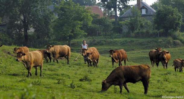 CETA agriculture