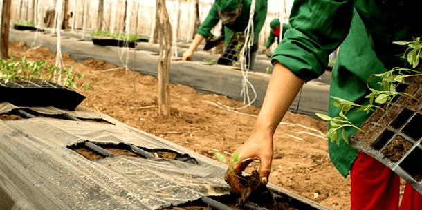34 ONG dénoncent le quasi arrêt des aides bio