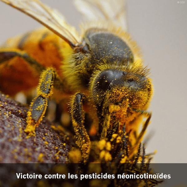 interdiction des pesticides néonicotinoides