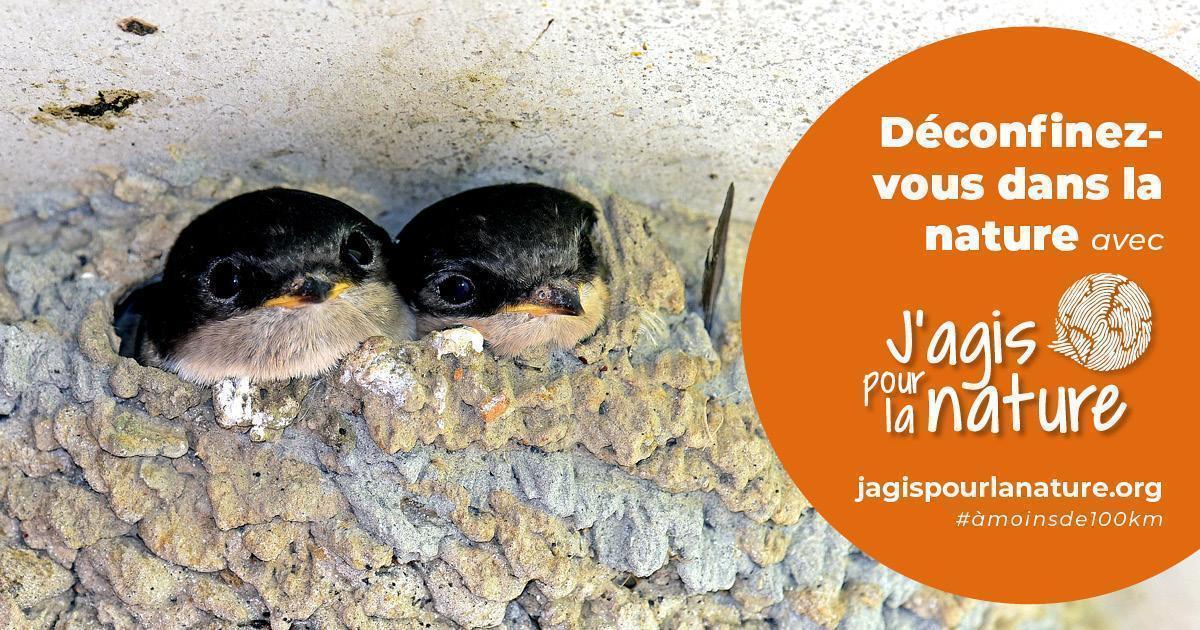 """Hirondelles sortant de leur nid, avec une inscription : """"Déconfinez-vous dans la nature avec jagispourlanature.org"""""""