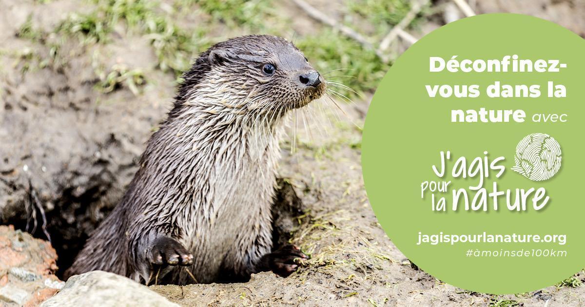 """Loutre sortant de sa tanière, avec une inscription : """"Déconfinez-vous dans la nature avec jagispourlanature.org"""""""