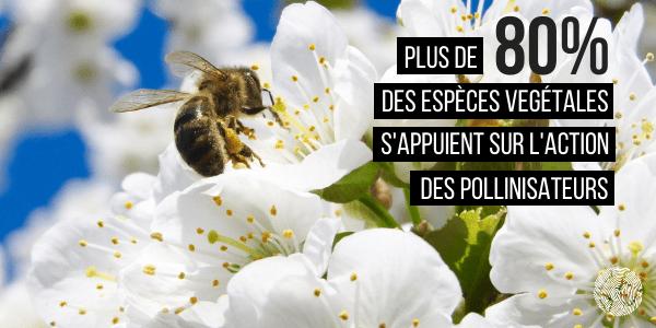 L'importance des pollinisateurs