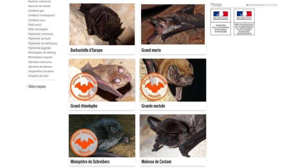 Page de présentation des espèces métropolitaines ©FCEN/PNA chiroptères