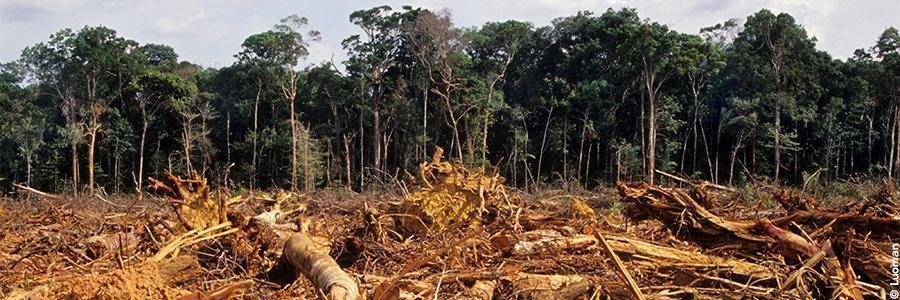 Déforestation Amazonie