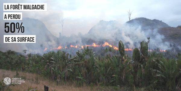 Rajako protège les lémuriens de Madagascar