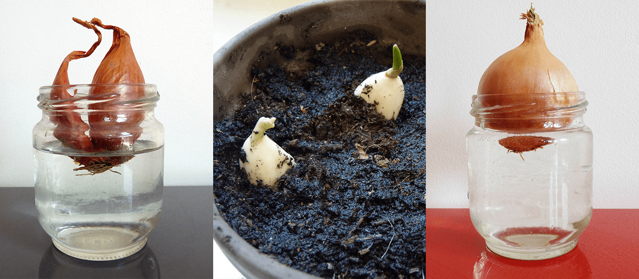 Légumes à planter pendant le confinement