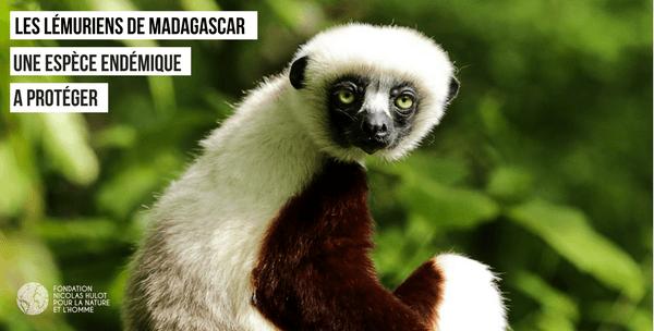 Lémuriens de Madagascar protéger par Rajako