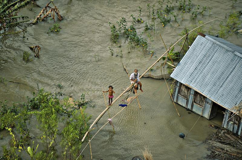Rizière au Bangladesh