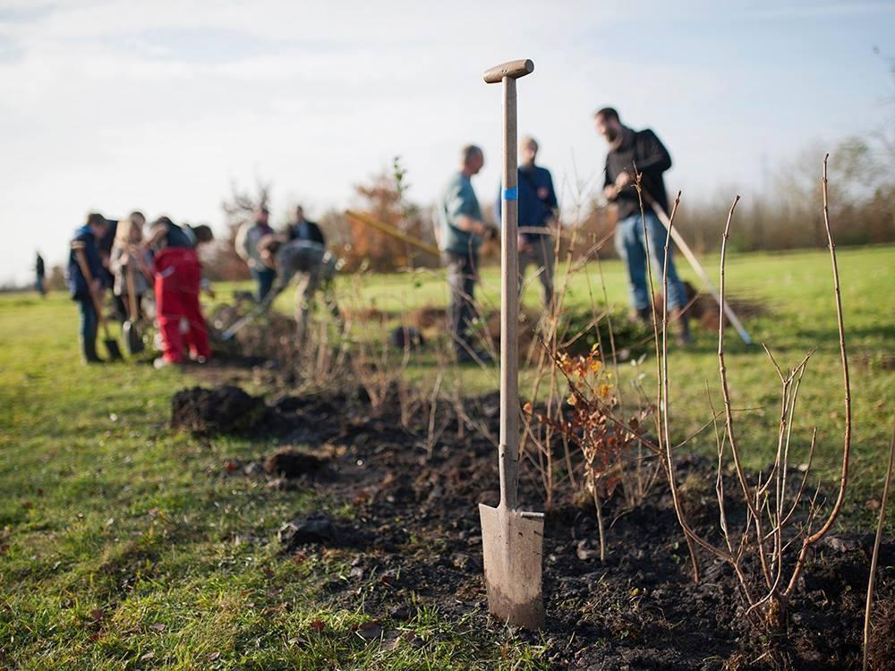 © Les Planteurs Volontaires