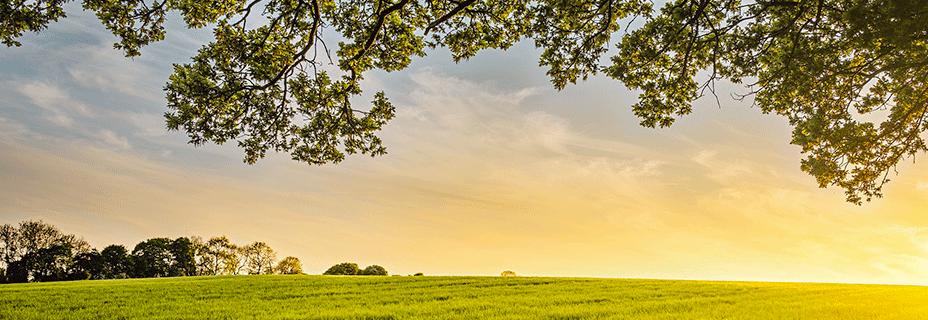 Les Français souhaitent que la politique agricole commune préserve l'environnement