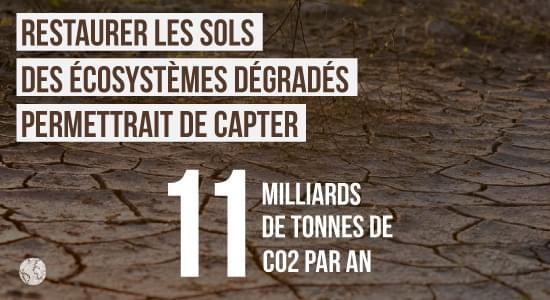 Rôle des sols et climat